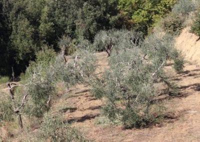 olivenlund-podere-umbro-citta-della-pieve-umbria-3756