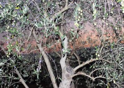 podere-umbro-citta-della-pieve-umbria-3530