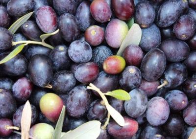 Modne oliven fra Umbria