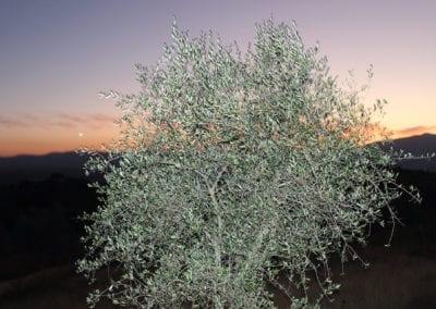 Solnedgang på gården Podere Umbro i Umbria