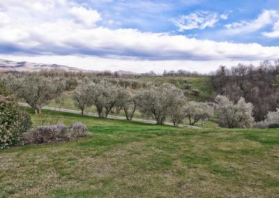 Azienda Agricola Pomario - utsikt