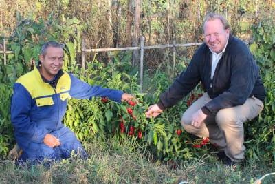 Jan Terje Melandsø fra Ditt Italia på besøk i chili-åkeren hos Massimiliano Fe på gården Poggione
